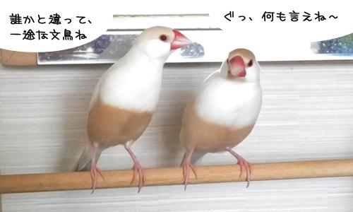 文鳥の歌4曲と弥冨の動画_1