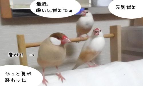 鳥がいっぱい出てくる小説_3