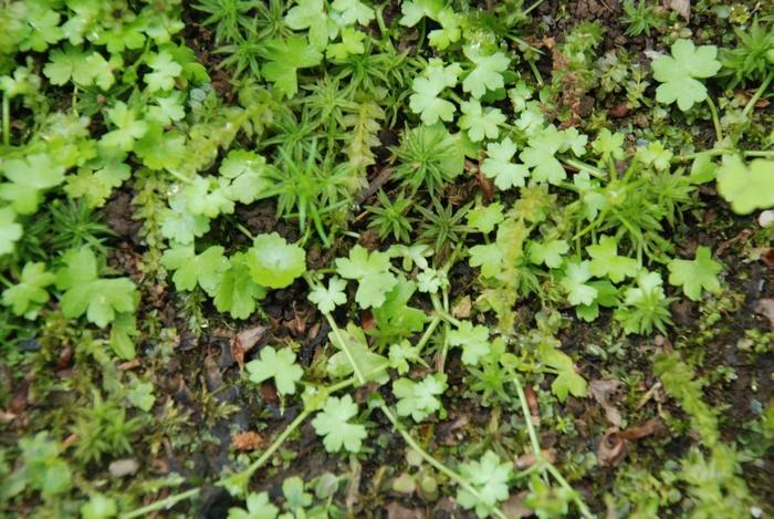 苔を覆う草32