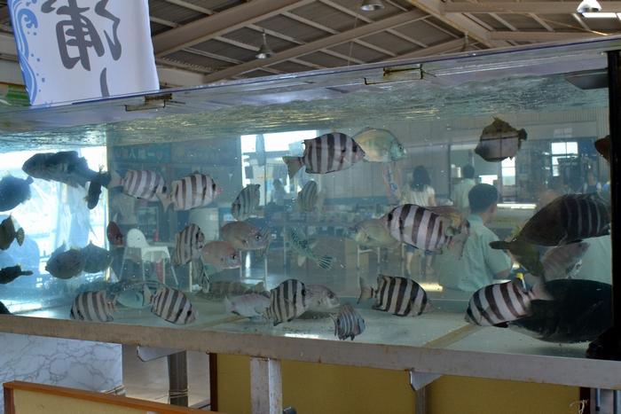 田子の浦港水槽38