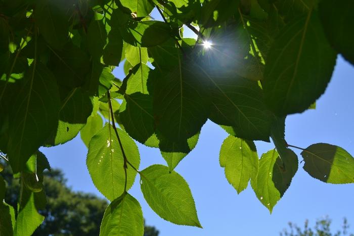照りつける太陽1