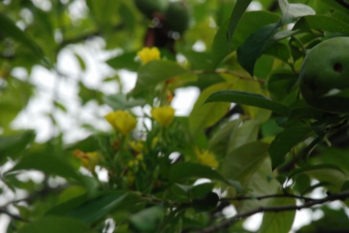 花梨と月見草17
