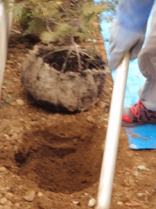 植栽工事 :エクステリア横浜(神奈川県・東京都の外構工事専門店)