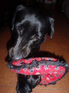 ラブラドールレトリバー :エクステリア横浜 愛犬と過ごすお庭空間(ドックラン)のご相談をお受けしております。