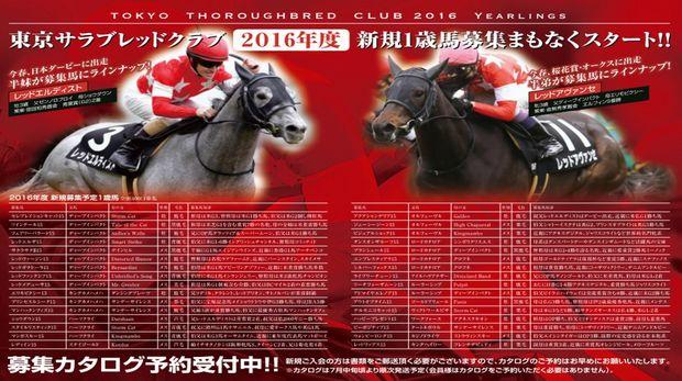 東京TC2016年募集馬ラインナップ