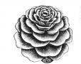 flower-1jpgLarge.jpg