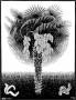 palmtreejpgLarge.jpg