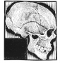 skull1jpgLarge.jpg
