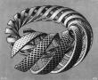 spiralsjpgLarge.jpg