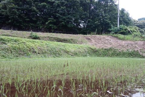 風邪の草刈り