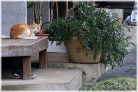 160402E 152縁側猫@坂浜32