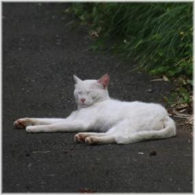 160723E 035猫@下柚木SQ