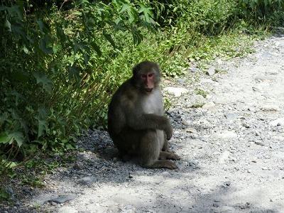 s-お猿さん