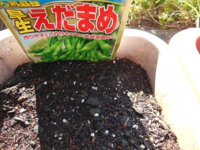 枝豆種まき