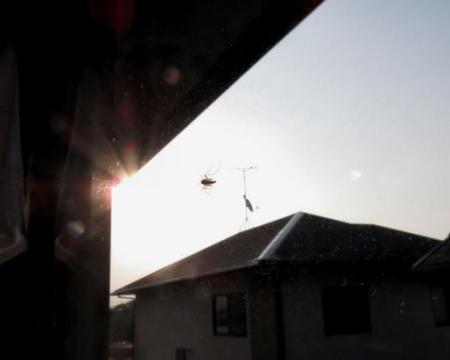 昆虫ユスリカ 030