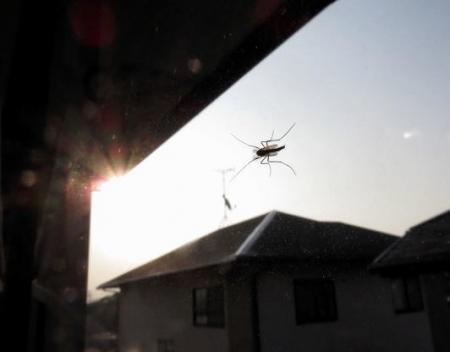 昆虫ユスリカ 028