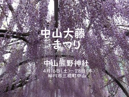 中山の藤の花 011