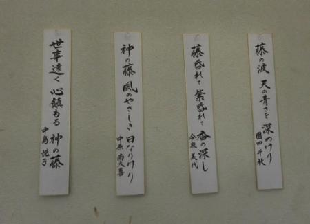 中山の藤の花 128