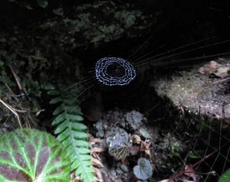 スミレの種・八女温泉昆虫 043
