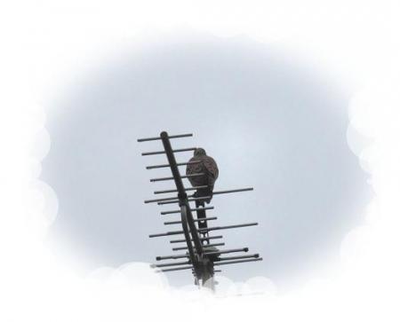 小雨と鳩 001