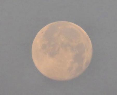 月ツバメ 003