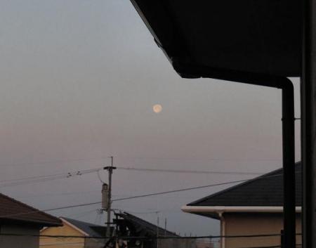 月ツバメ 005