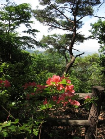 コシハキ・小岱山 098