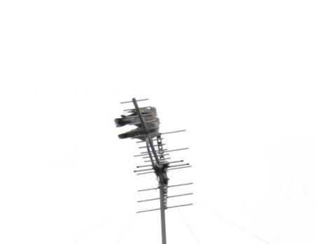櫨実・雀・髪切虫・ヤマボウシ 002