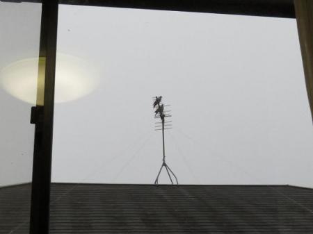 朝の鳩番 009