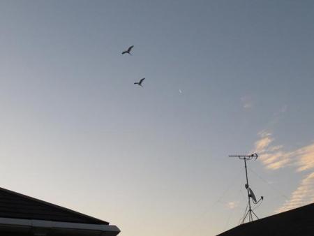 月と鳥 004
