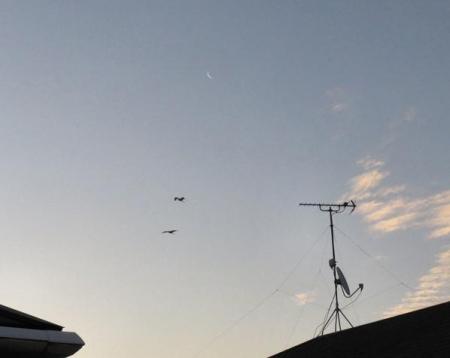 月と鳥 003