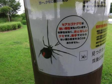 松原ハグロトンボ 008