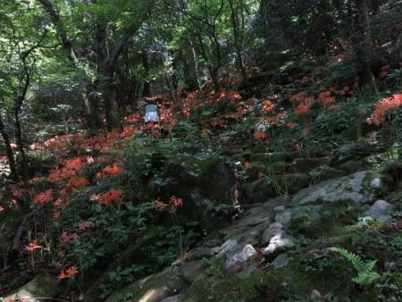 キツネ八幡岳 093