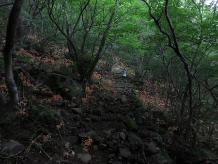 キツネ八幡岳 086