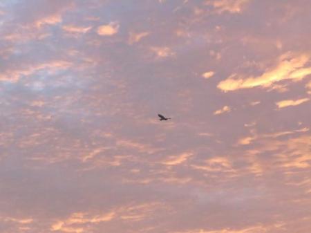 朝焼け雲 003