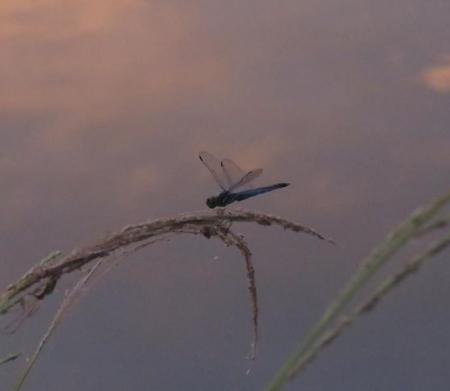 朝焼け雲 012