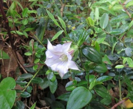 カラ迫岳 028