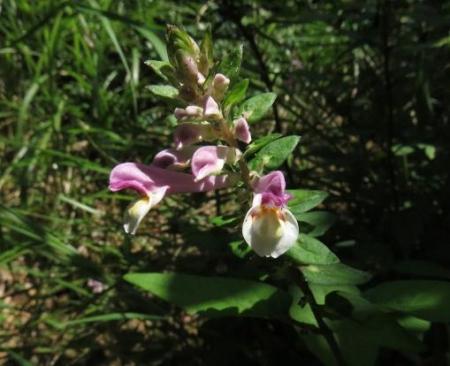 カラ迫岳 053