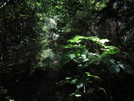 カラ迫岳 048