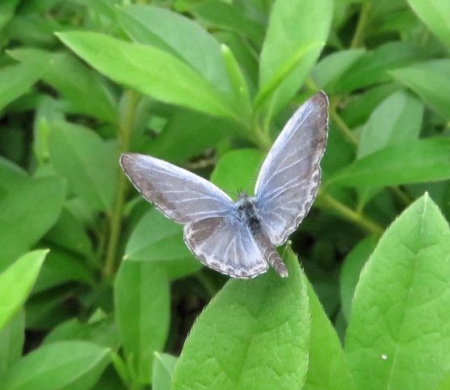 清水の昆虫 038