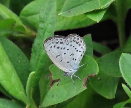 清水の昆虫 039