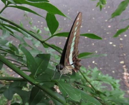 清水の昆虫 031