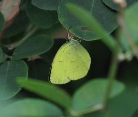 清水の昆虫 058