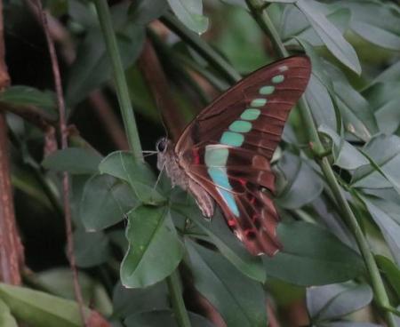 清水の昆虫 022