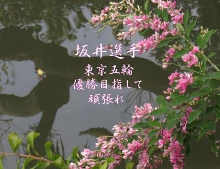 坂井聖人 013