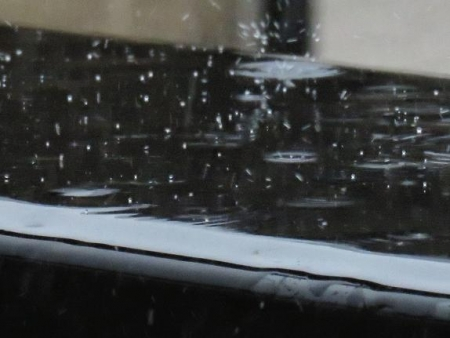 雨の朝鳥 140