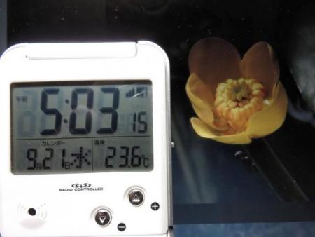 今朝の気温 001