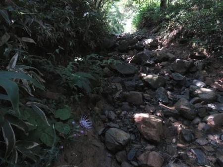 モウセンゴケ天山 106