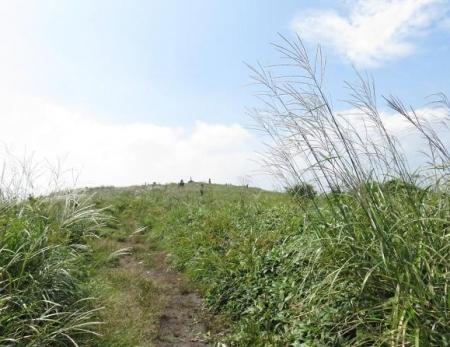 モウセンゴケ天山 181