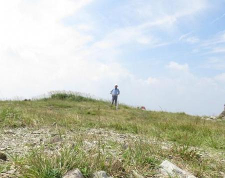 モウセンゴケ天山 156